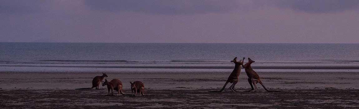 La plage aux Kangourous